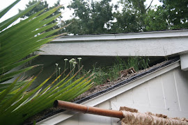 Sloped Green Roof Florida
