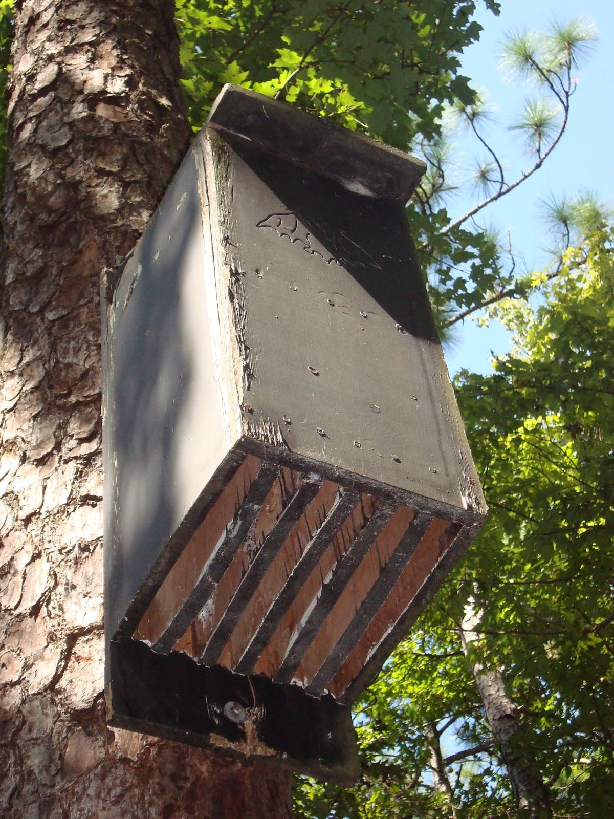 Urban foodfare not warfare food plants 4 urban core for Bat condo