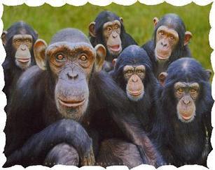 Comitato Primati