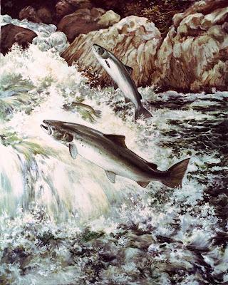 Daubmir's Salmon