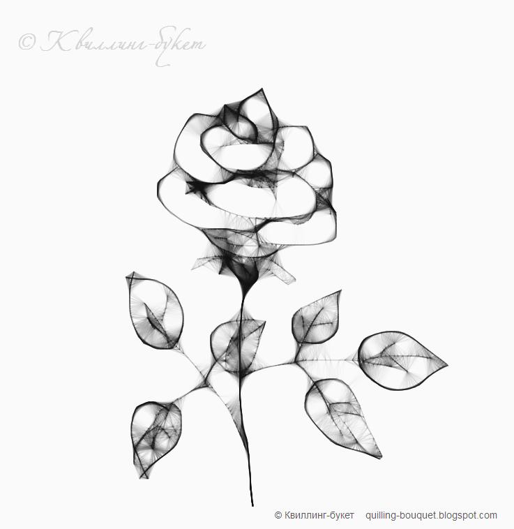 чёрно белая роза фото