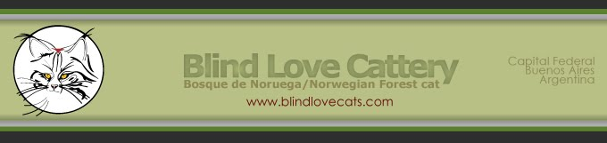Blind Love Cats