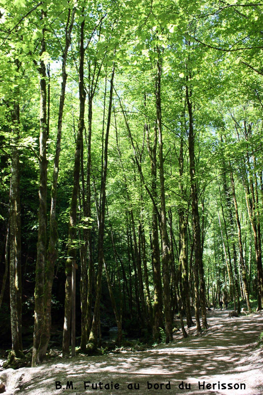 Decouverte arbre for Haute futaie