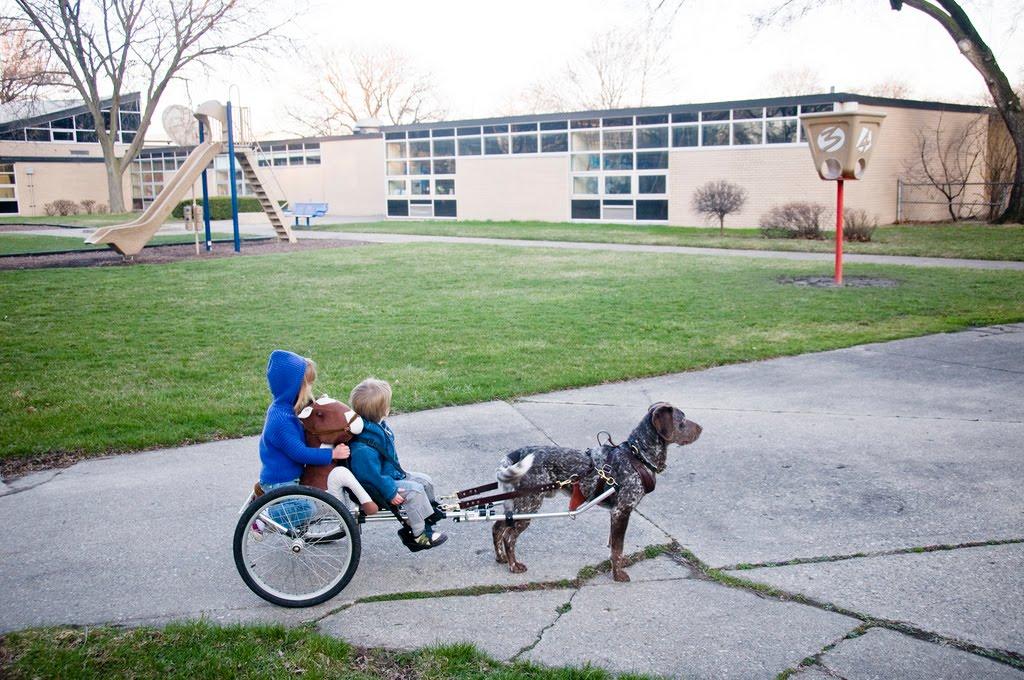 The Dog Wagon Sweet Juniper. The Dog Wagon. Wiring. Homemade Dog Pulling Harness At Scoala.co