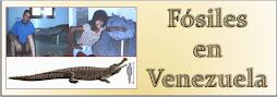 Fósiles en Venezuela
