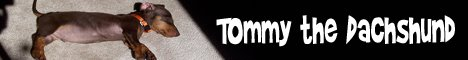 Tommy the Dachshund