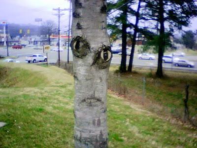 Soy un piojo :3 Pareidolia_tree
