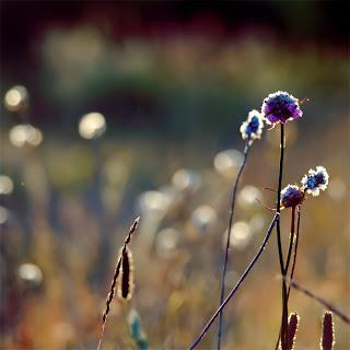 Цветы и критики