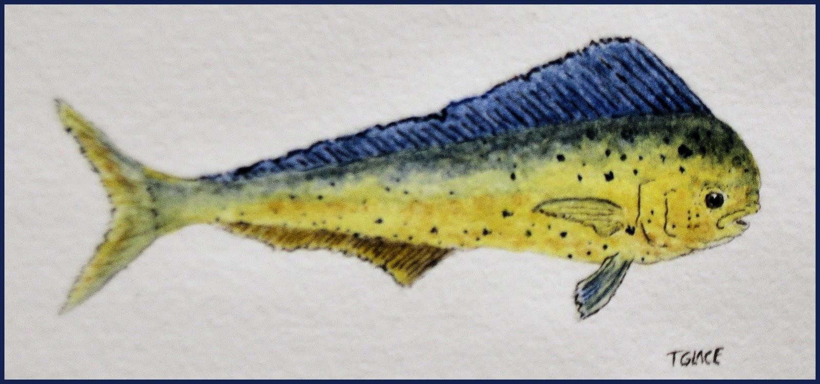 Study florida for Florida game fish