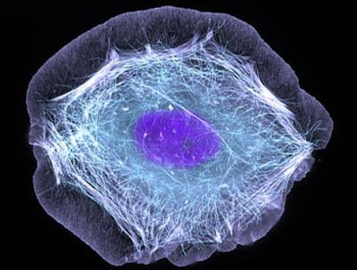 Cuerpo humano al increible nivel celular