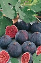 Com les fruites de l'arbre