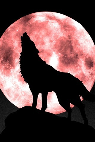 Penguin vs Spiders vs Wolves Howling_Wolf_Moon