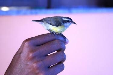 Os pássaros sentem quem os fazem bem!!