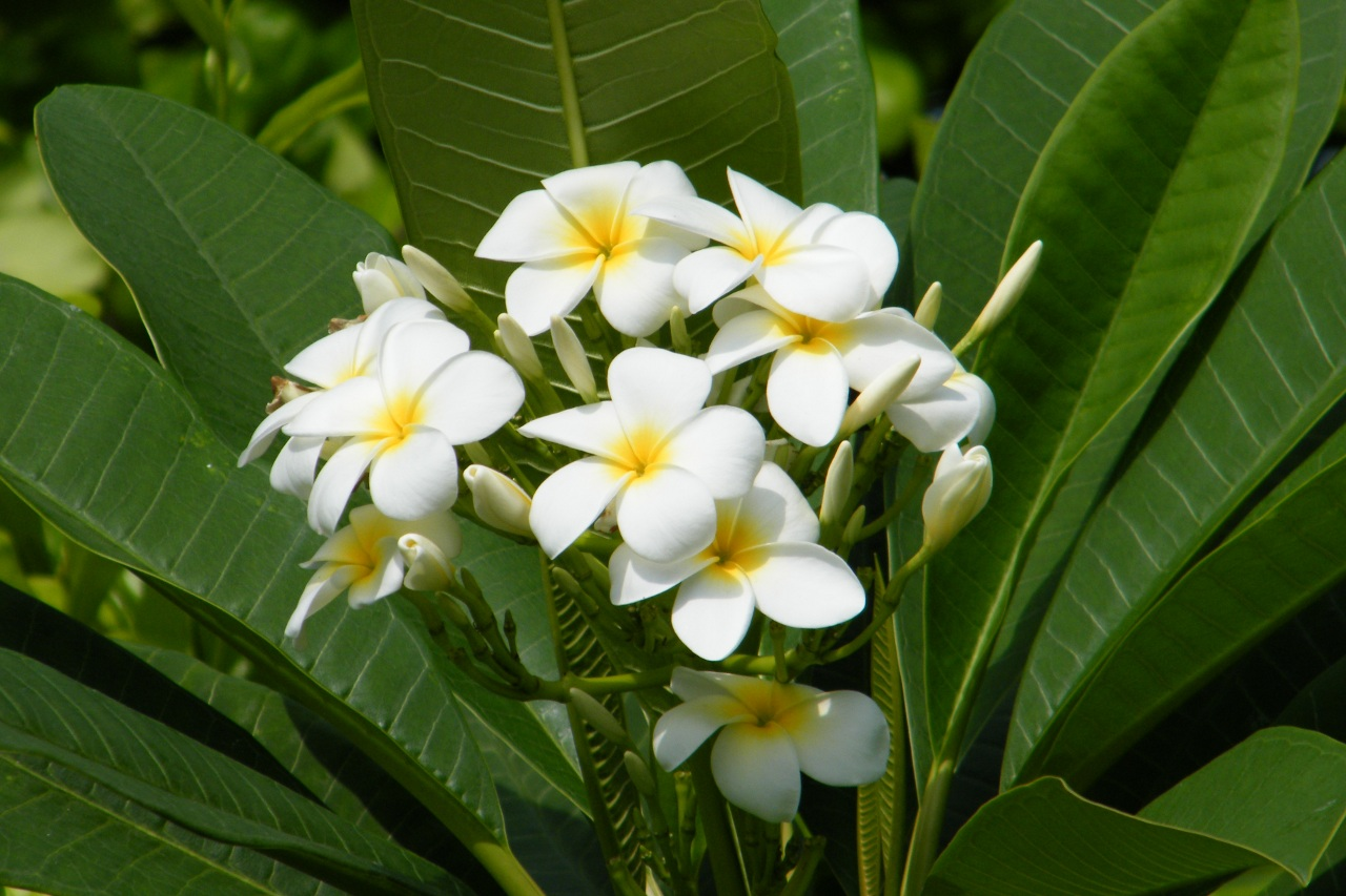 Plantas Ecosia