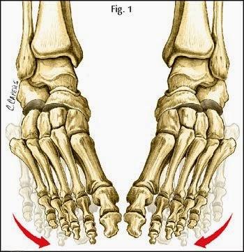 [foot.jpg]