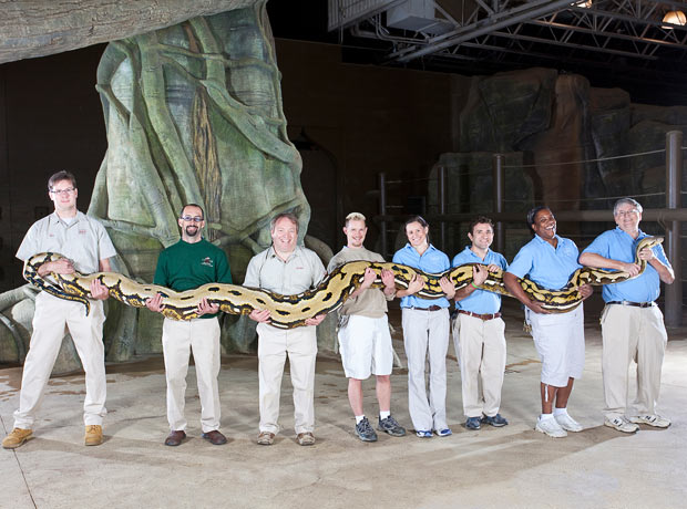 Weird Guinness World Records Amazing Pictures : World record python from amazing-pictures.blogspot.com size 620 x 460 jpeg 71kB
