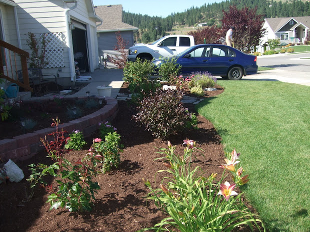 folks home front yard landscaping