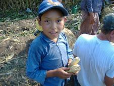 Corn Project