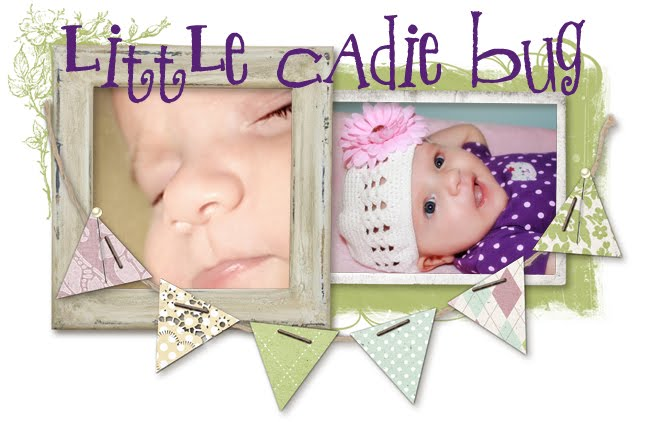 Little Cadie Bug