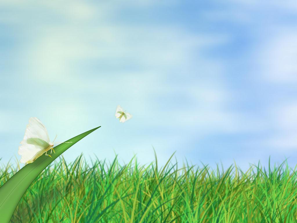 http://1.bp.blogspot.com/_PyzGklHH3A4/THRSN4dvxcI/AAAAAAAAAPo/xNsAvW0nGCE/s1600/Nature+Best+Wallpapers+butterflies.jpg