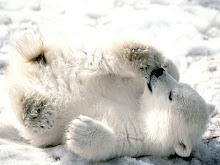 Polar?