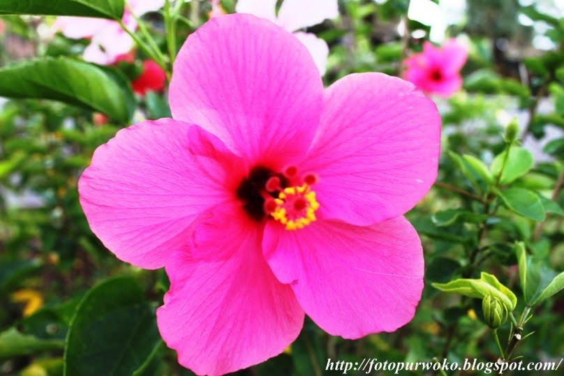 Gambar Bunga Yang Paling Cantik Dan Indah Di Dunia /page/page/290
