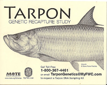 Tarpon Genetic Recapture Study
