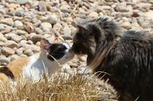 Izzy & Zoey