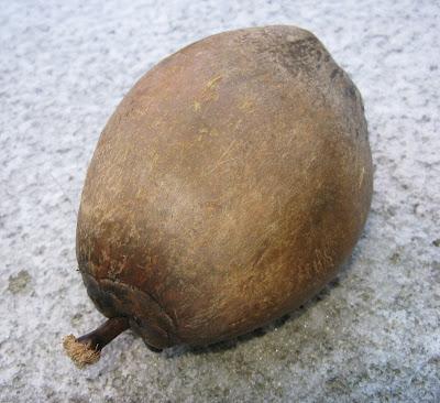 cocunut - Binuangon Tawhana - Pulong Bisaya