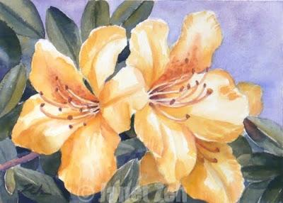 yellow azaleas watercolor painting