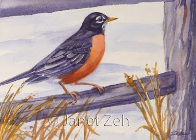 American Robin watercolor painting