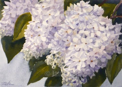 White Lilacs watercolor painting