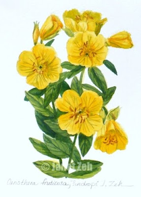 Sundrops watercolor painting