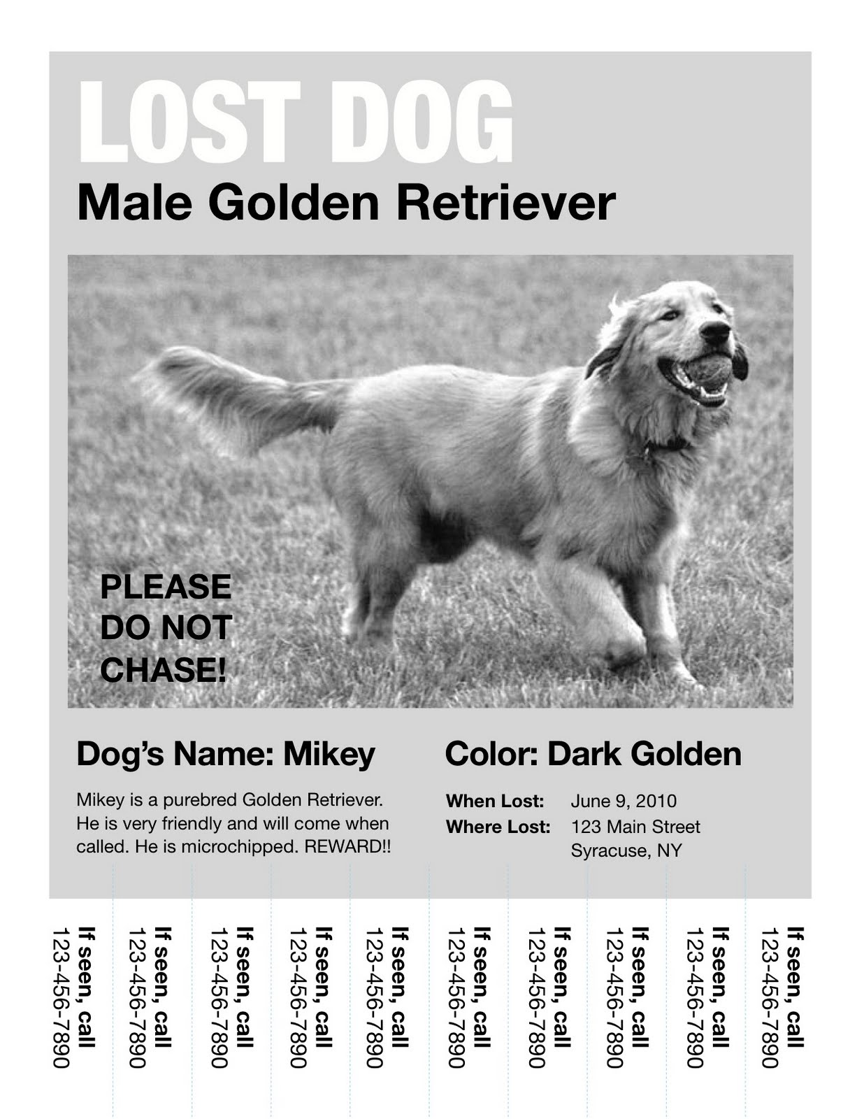 missing dog flyer - Selo.l-ink.co
