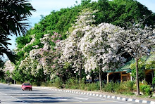 Spring time at Alor Setar