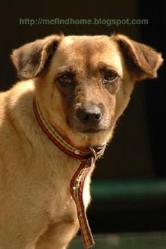 MeFindHome.org: Adopt Celine