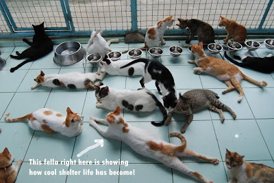 PAWS Cattery
