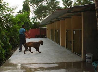 PAWS Dog Quarantine