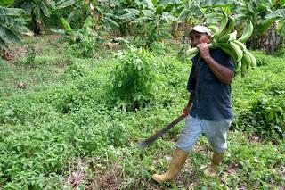 Principal actividad economica de republica dominicana