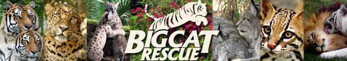 Big Cat Rescuers