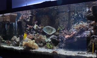 acquario marino di barriera