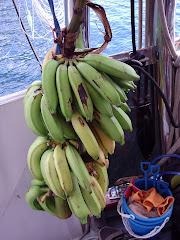 tons of bananas!