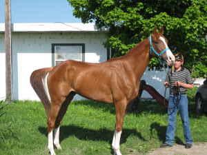 5 Acre Dream (minus the 5 acres): Craigslist Horses