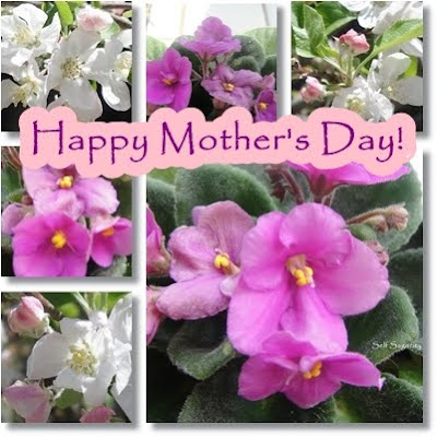 african violet mother's day wish