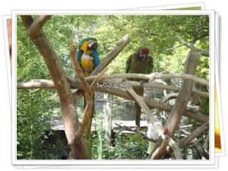 green gold parakeet