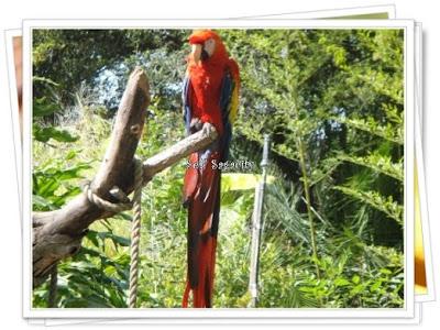 red gold parakeet