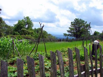 Brinegar garden