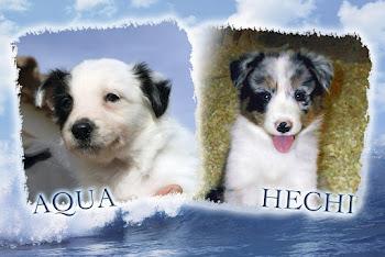 AQUA & HECHI