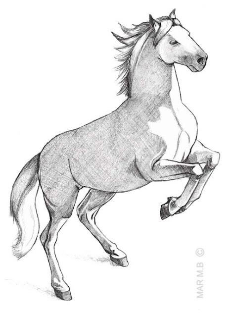 caballo
