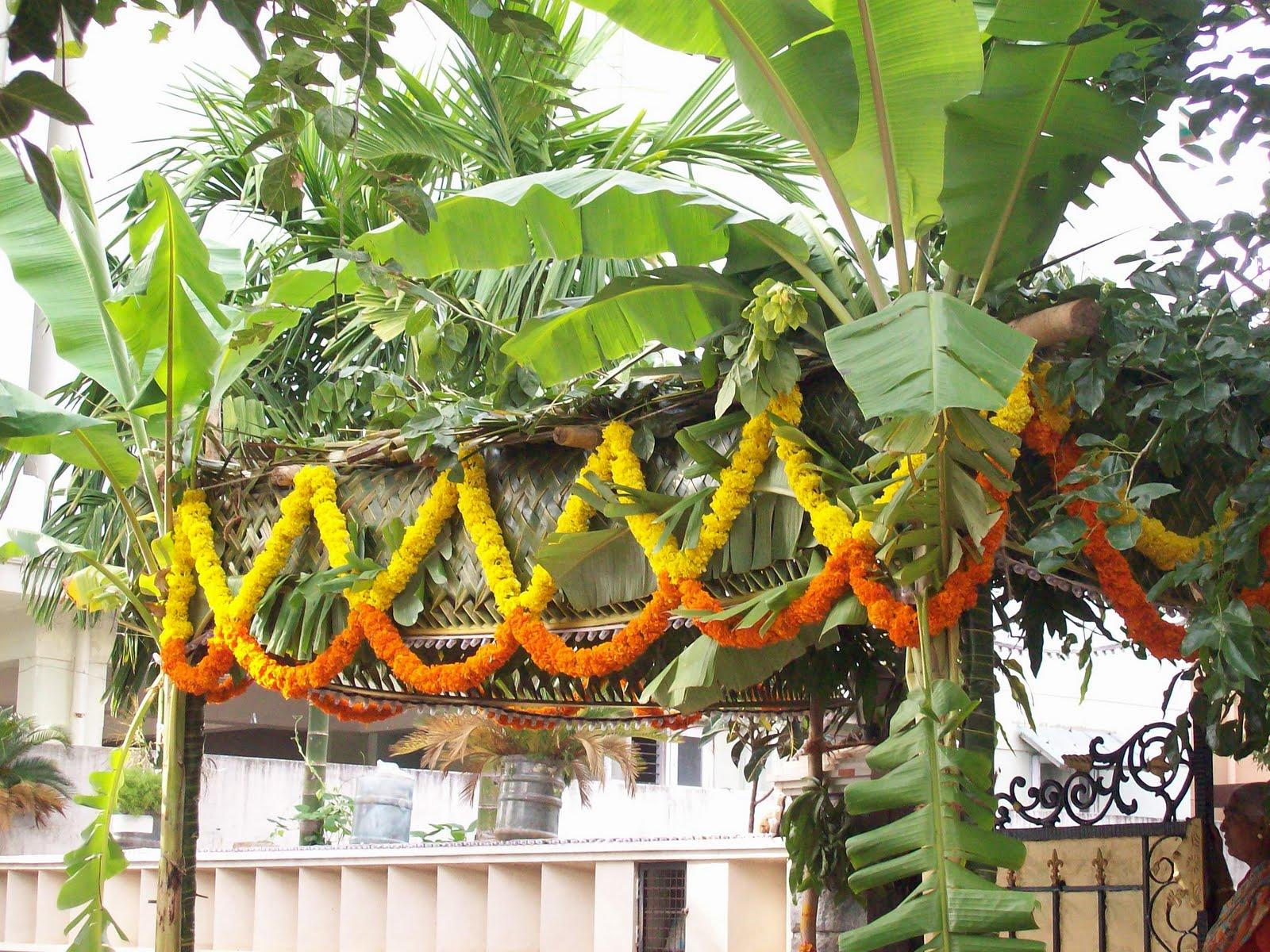 Gardentropics Marigold The Versatile Flower